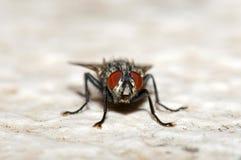 Alloggi la mosca Immagine Stock Libera da Diritti