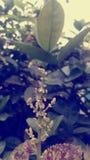 Alloggi la mosca Fotografie Stock Libere da Diritti