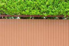 Alloggi la parete con il piccolo albero verde sul contesto superiore, all'aperto Immagine Stock Libera da Diritti