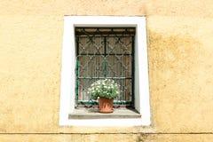 Alloggi la parete con la finestra e la pianta in Durnstein, Wachau, Austria Fotografie Stock