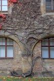 Alloggi la parete con le viti variopinte e le foglie di autunno Immagine Stock Libera da Diritti