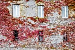 Alloggi la parete coperta di vite rossa di autunno in Kutaisi Fotografie Stock Libere da Diritti