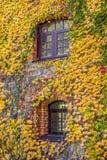 Alloggi la parete invasa con l'uva selvaggia, scena di autunno Fotografia Stock Libera da Diritti