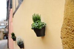 Alloggi la parete in una città medievale decorata con i vasi da fiori con le piante naturali Immagine Stock Libera da Diritti
