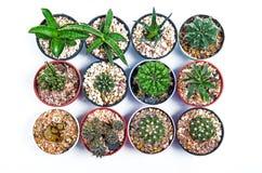 Alloggi la pianta Fotografie Stock