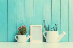Alloggi la pianta Fotografia Stock