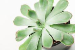 Alloggi la pianta Immagini Stock Libere da Diritti