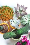 Alloggi la pianta Fotografia Stock Libera da Diritti