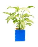 Alloggi la pianta Immagine Stock Libera da Diritti