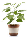 Alloggi la pianta Immagine Stock