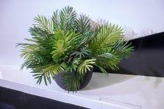 Alloggi la pianta in contenitore nero su area in bianco e nero Immagine Stock Libera da Diritti
