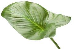 Alloggi la pianta su bianco Fotografie Stock Libere da Diritti