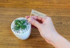 Alloggi la pianta in un vaso ceramico su un fondo di legno Immagini Stock Libere da Diritti