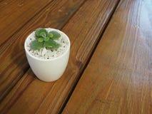 Alloggi la pianta in un vaso ceramico su un fondo di legno Fotografie Stock
