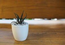 Alloggi la pianta in un vaso ceramico su un fondo di legno Fotografia Stock