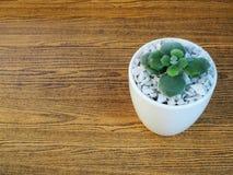 Alloggi la pianta in un vaso ceramico su un fondo di legno Immagine Stock Libera da Diritti