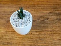Alloggi la pianta in un vaso ceramico su un fondo di legno Fotografia Stock Libera da Diritti