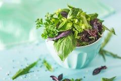 Alloggi la pianta in un vaso di fiore su fondo Fotografie Stock Libere da Diritti