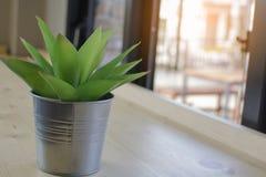 Alloggi la pianta verde in un vaso dello zinco sulla tavola di legno, piccolo luccio Immagini Stock Libere da Diritti
