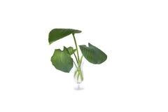 Alloggi la pianta in vetro, pianta isolata su bianco Fotografie Stock Libere da Diritti