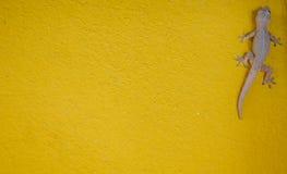 Alloggi la piccola lucertola - geco su struttura gialla del fondo Fotografia Stock Libera da Diritti