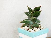 Alloggi la raccolta della pianta in piccoli vasi da fiori su struttura di legno del fondo Immagine Stock Libera da Diritti