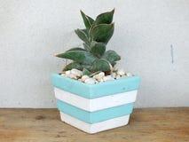 Alloggi la raccolta della pianta in piccoli vasi da fiori su struttura di legno del fondo Immagini Stock