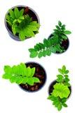 Alloggi la raccolta isolata della pianta verde su fondo bianco Immagini Stock Libere da Diritti