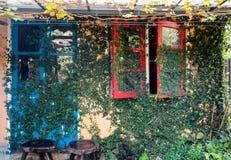 Alloggi la vite naturale esteriore dell'edera sulla porta e sulla finestra Immagine Stock Libera da Diritti