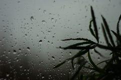 alloggi le piante e le gocce di pioggia sul vetro di finestra Fotografia Stock