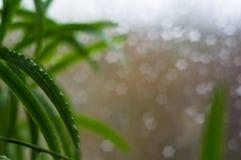 alloggi le piante e le gocce di pioggia sul vetro di finestra Fotografie Stock