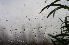 alloggi le piante e le gocce di pioggia sul vetro di finestra Fotografie Stock Libere da Diritti