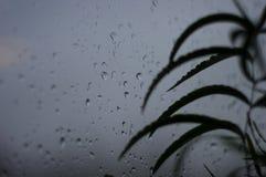 alloggi le piante e le gocce di pioggia sul vetro di finestra Immagine Stock Libera da Diritti