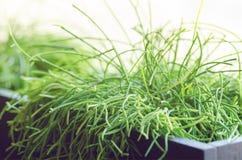Alloggi le piante, l'erba, verdi vicino alla finestra Stile di vita di interior design del salone o del caffè, ristorante, uffici Immagine Stock