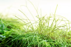 Alloggi le piante, l'erba, verdi vicino alla finestra Stile di vita di interior design del salone o del caffè, ristorante, uffici Immagini Stock
