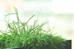 Alloggi le piante, l'erba, verdi vicino alla finestra Stile di vita di interior design del salone o del caffè, ristorante, uffici Immagini Stock Libere da Diritti