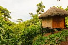 Alloggi in mezzo alla giungla amazzoniana, fauna selvatica di Yasuni con riferimento a Fotografia Stock Libera da Diritti