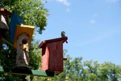 """Alloggi per il †degli uccelli """"un nido per deporre le uova Fotografia Stock"""