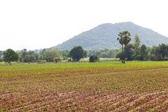 Alloggio della piantagione della manioca Immagini Stock