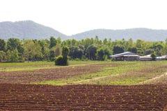 Alloggio della piantagione della manioca Fotografie Stock