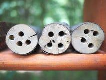 Alloggio per le api selvagge della foresta Fotografie Stock