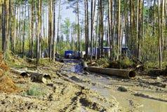 Alloggio temporale scomodo nella foresta Fotografia Stock