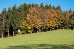 Allori autunnali davanti alle conifere verdi con l'alto sedile Immagine Stock