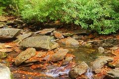 alloro di montagna da un fiume fumoso della montagna Fotografie Stock