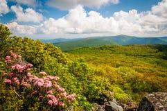 Alloro di montagna e punto di vista del Ridge blu sulle scogliere pietrose dell'uomo i Fotografie Stock