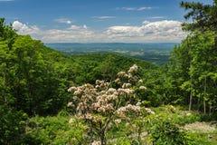 Alloro di montagna e Shenandoah Valley Fotografie Stock Libere da Diritti