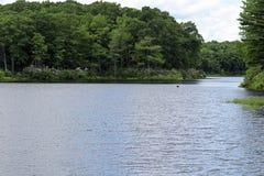 Alloro di montagna intorno al lago Fotografie Stock