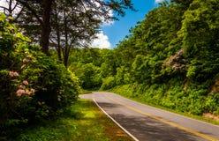 Alloro di montagna lungo l'azionamento dell'orizzonte nel parco nazionale di Shenandoah Fotografie Stock