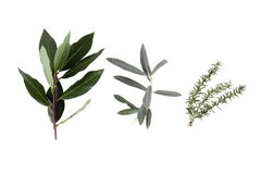 Alloro, oliva e rosmarini Fotografia Stock Libera da Diritti