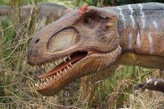 Allosauro - allosauro fragilis Fotografia Stock Libera da Diritti